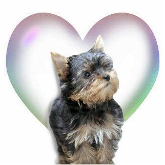 Coração do yorkshire terrier fotoescultura