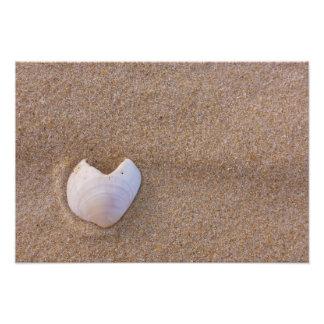 Coração Shell Impressão De Foto