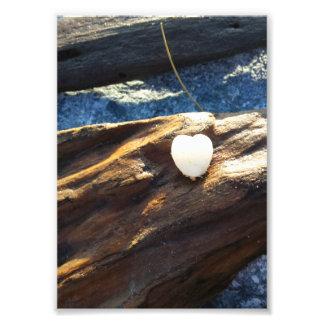 Coração Shell na madeira Impressão De Foto