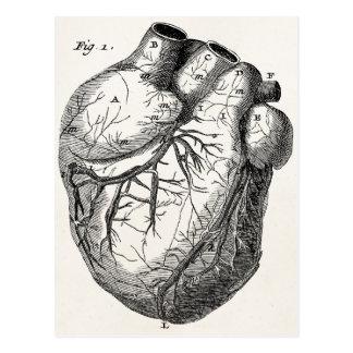 Corações cardíacos retros da anatomia do coração cartão postal