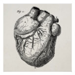 Corações cardíacos retros da anatomia do coração d impressão