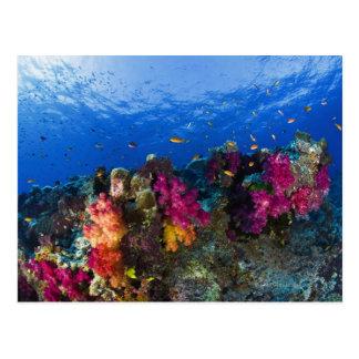 Corais macios no recife raso, Fiji Cartão Postal