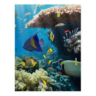 Coral e peixes no Mar Vermelho, Egipto Cartão Postal