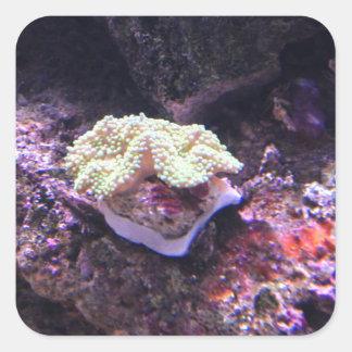 Coral macio colorido e rochas vivas adesivo quadrado