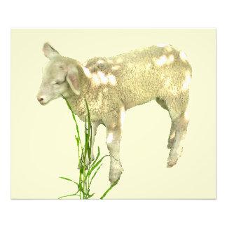 Cordeiro do bebê na grama no impressão amarelo da impressão de foto