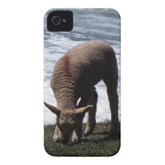 Cordeiro sul Grazeing de Devon no litoral selvagem Capinha iPhone 4