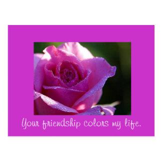 Cores da amizade minha vida cartão postal