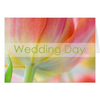 Cores do cartão das felicitações do casamento do