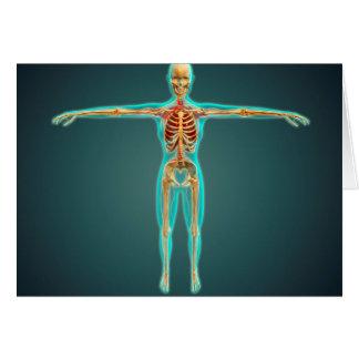 Corpo humano que mostra o sistema esqueletal, cartoes