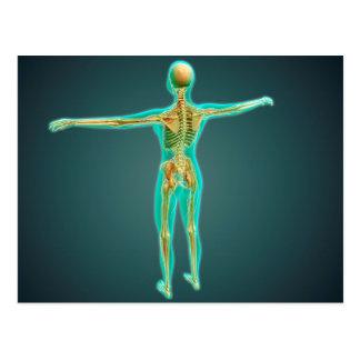 Corpo humano que mostra o sistema esqueletal, cartões postais