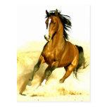 Corredor do cavalo cartão postal