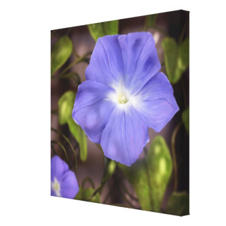 Corriola - canvas de arte 24x24 da flor impressão de canvas esticada