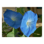 corriolas azuis impressão