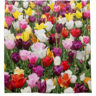 Cortina Para Box Campos da tulipa
