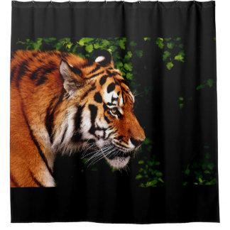 Cortina Para Box Enfrentar selvagem adulto do direito do tigre
