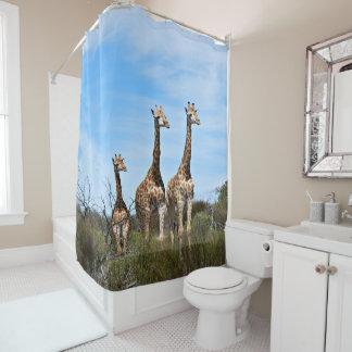 Cortina Para Box Família do girafa na cume gramínea