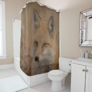 Cortina Para Box Fox na cortina de chá