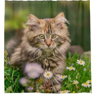 Cortina Para Box Gato bonito do gatinho do racum de Maine em uma