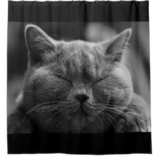Cortina Para Chuveiro Cara cinzenta Napping do gato