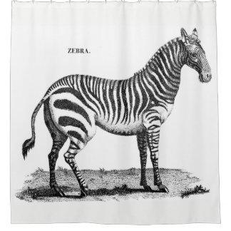 Cortina Para Chuveiro Cortina de chá da zebra