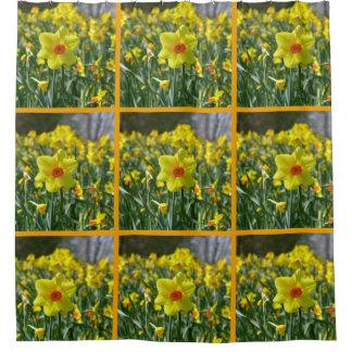 Cortina Para Chuveiro Daffodils amarelos alaranjado 01,0, primavera