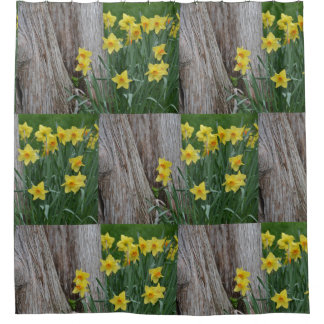 Cortina Para Chuveiro Daffodils da primavera