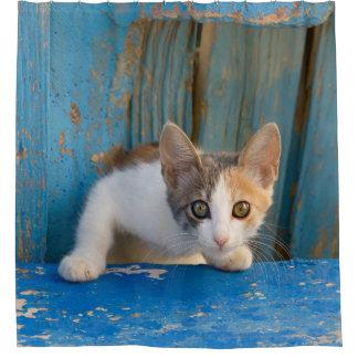 Cortina Para Chuveiro Foto curiosa engraçada dos olhos do gatinho bonito