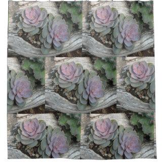 Cortina Para Chuveiro Teste padrão do Succulent de Echeveria