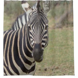 Cortina Para Chuveiro zebra