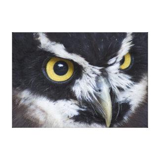 Coruja preto e branco de Specacled Impressão De Canvas Esticadas