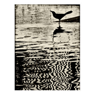 Corvo com reflexão na água - cartão