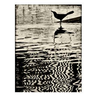 Corvo com reflexão na água - cartão cartão postal