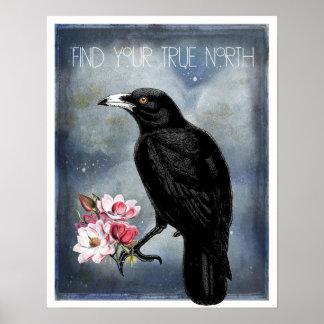 Corvo do norte verdadeiro e poster das magnólias