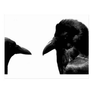 Corvo e corvo cartão postal