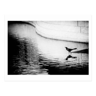 Corvo preto com reflexão na água - foto Postca Cartão Postal