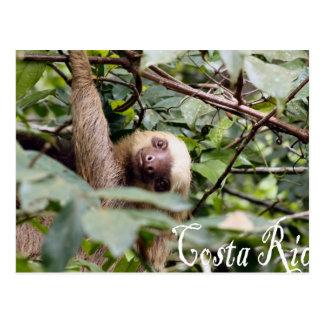Costa Rica - cartão da preguiça