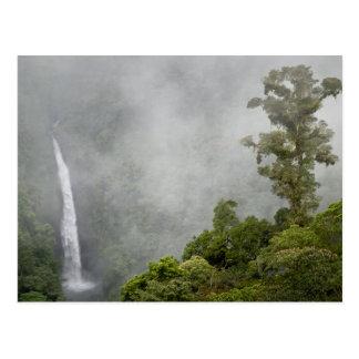 Costa Rica, floresta da nuvem nas montanhas aproxi Cartão Postal