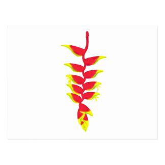 Costa Rica Heliconia Cartoes Postais