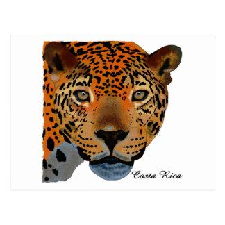 Costa Rica Jaguar Cartão Postal