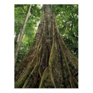 Costa Rica, parque nacional de Corcovado, Cartão Postal