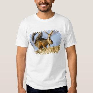 Costa Rica. Sciurus Variegated do esquilo T-shirt