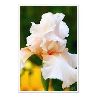 """Costume branco 13"""" da íris x 19"""" ampliação da foto impressão de foto"""