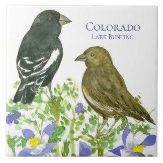 Cotovia aquilégia das flores que Bunting Colorado