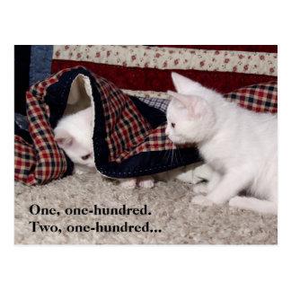 Couro cru do gatinho - e - procure o cartão do