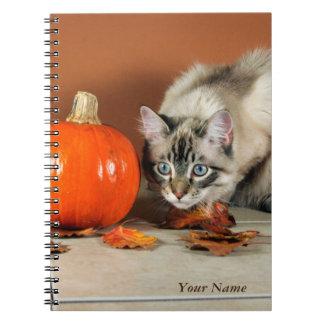 Couro cru & gato Siamese da busca com a abóbora Cadernos Espiral