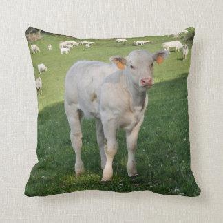 Coxim branco da foto da vitela do charolês almofada
