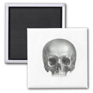 Crânio do vintage ímã quadrado