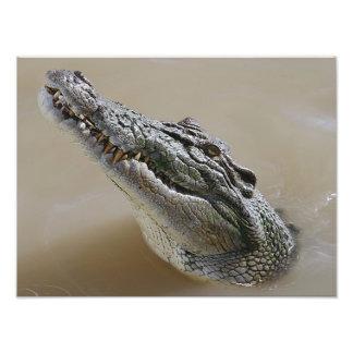 Crocodilo australiano Darwin da água salgada Impressão Fotográfica
