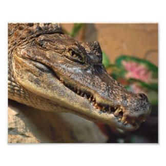 Crocodilo Impressão De Foto