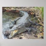 Crocodilo jamaicano da água salgada posters